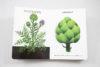 Page intérieure de l'ouvrage Légumes de saison